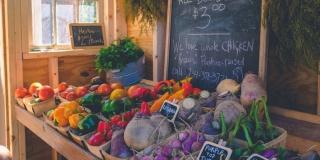 Динамика цен на основные продукты питания,  август