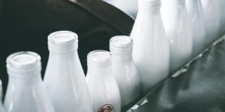 И запируем на просторе: обзор петербургского рынка молочных продуктов